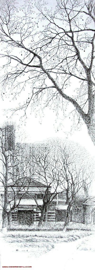 睦南公园的悬铃木+40-5