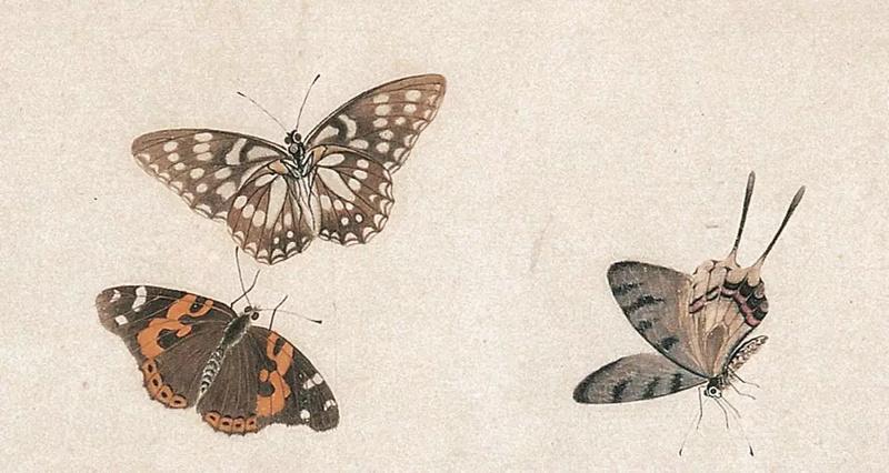爱新觉罗画派-溥僩《蝴蝶图谱》欣赏
